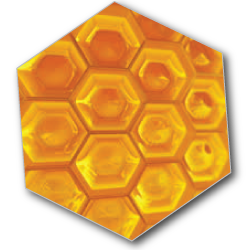 Honey honeycombs of bees are the natural state of honey as bees gather and store, as winter supply of food.