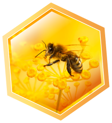 Royal Bees High quality bee honey and bees products